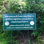 ศาลพิพากษาคดีม้งห้วยน้ำรินบุกรุกป่าสงวน จำคุก 1 ปี ให้รอลงอาญา
